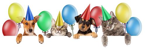 katzen und hunde mit partyhüten zum 30. geburtstag